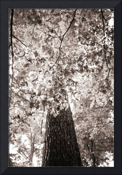 The Canopy in BW
