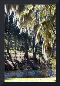 backlit spanish moss and teal stream