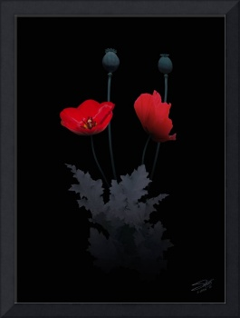 The Opium Poppy