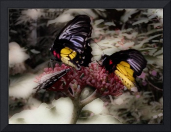 Two Butterflies in Infrared