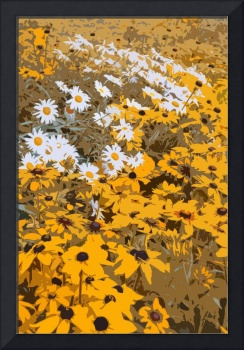 Black Eyed Susans and Daisies