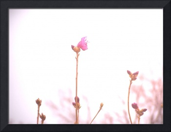 in bloom, photography by lisa casineau