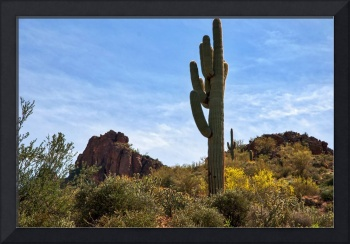 The Saguaro Against The Sky
