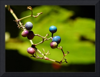 Polychrome Berries