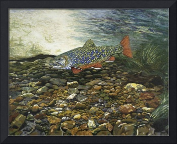 Trout Fine Art Print Brook Trout Fish Nature Art