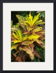 Varigated Leaves by Rich Kaminsky