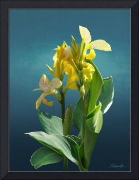 Spade's Yellow Canna Lily