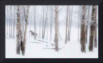 A Horse Stands Beside A Forest Of Bare Trees In Wi