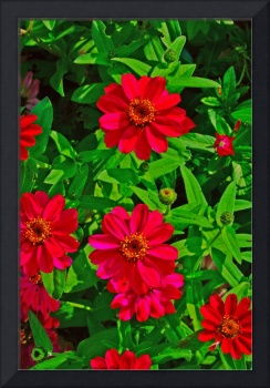 Two Purple Flowers Bright Colors Fake HDR