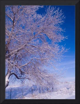Frosted Branches and Blue Sky