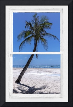 Palm Tree Tropical Window View