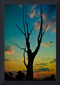 Tree at sunset in Zambia