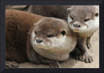 Mother and Baby Otter