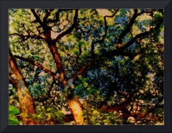 PENANG TREES, Abstract Trees, v8, Edit C