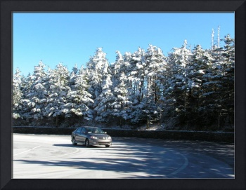 Snow-capped trees on Mt. Mitchell