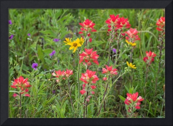 Texas Wildflower Mix