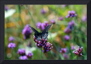 Butterfly in field of flowers