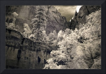 Zion - infrared trees landscape