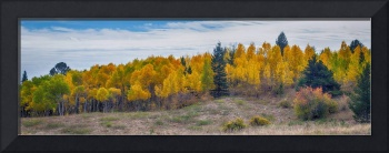Autumn Season Aspen Panorama Scenic View