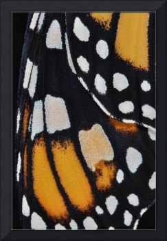 Monarch Butterfly Wing Abstract No4