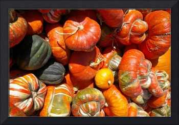 Gourds in Keremeos