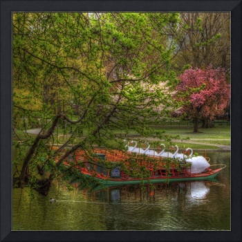 Swan Boats in Boston Public Garden