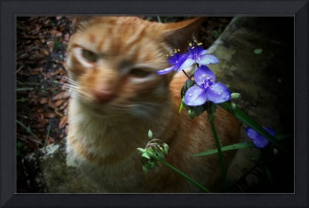Flowers Over Tigger