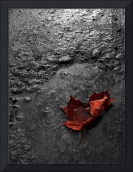 Broken Maple Leaf in Polluted Water