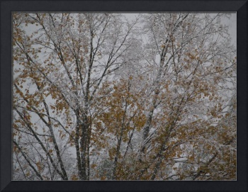 Early Snow Fall In Autumn, Nature Photography