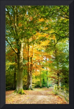 Digital Art Autumn Tree Lined Pathway