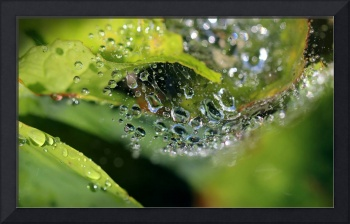 On Drops of Dew 2016