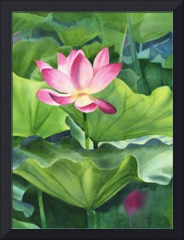 Magenta Colored Lotus Blossom