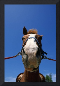 Low-Angle View Of Horse Wearing Bridle