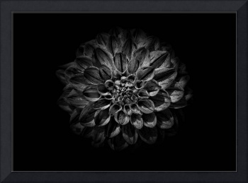 Backyard Flowers In Black And White 57