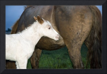 White foal with mother