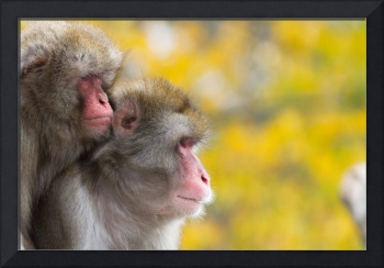 Monkeys in Autumn