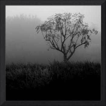 Tree in the Fog No. 08 Square