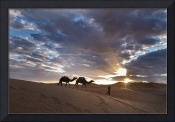 Two Camels in the Sunrise, Dunes, Sahara, Er-Risan