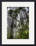 Redwood Rhododendrons by Mark Cullen