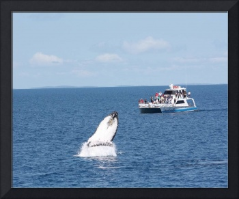 NaP_ Whale Watching167a