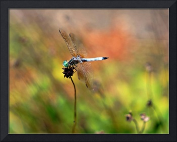 Dragon Fly Vll