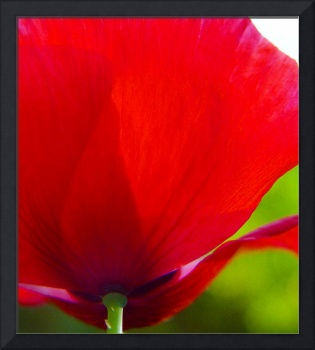 Mary's Other Poppy