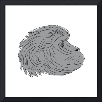 Gelada Monkey Head Side Drawing