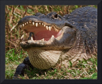 Alligator and Teeth