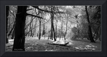 Lickey forest