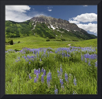 Lupines and Gothic Mtn