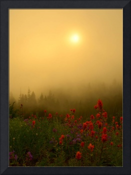 Indian Paintbrush Dawning