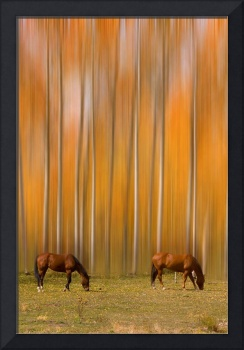 Two Colorado High Country Mystic Autumn Horses