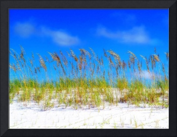 Destin Sea Oats