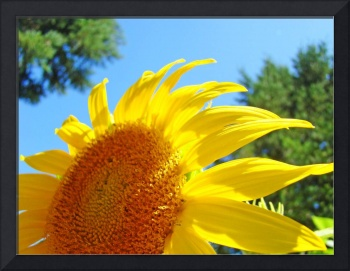 Sunflower Yellow Bright Sunny Sun Flower Art Print
